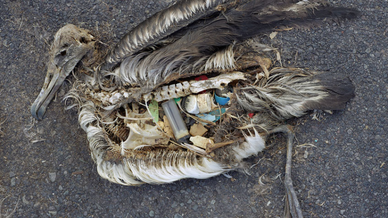 Is it Better to Recycle or Ban Plastic?