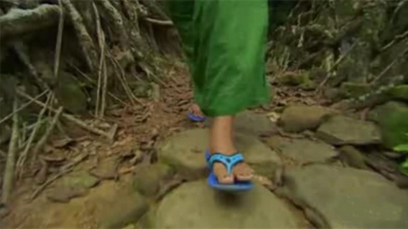 Inspiring Sustainability: Check Out This Living Bridge In Meghalaya, India