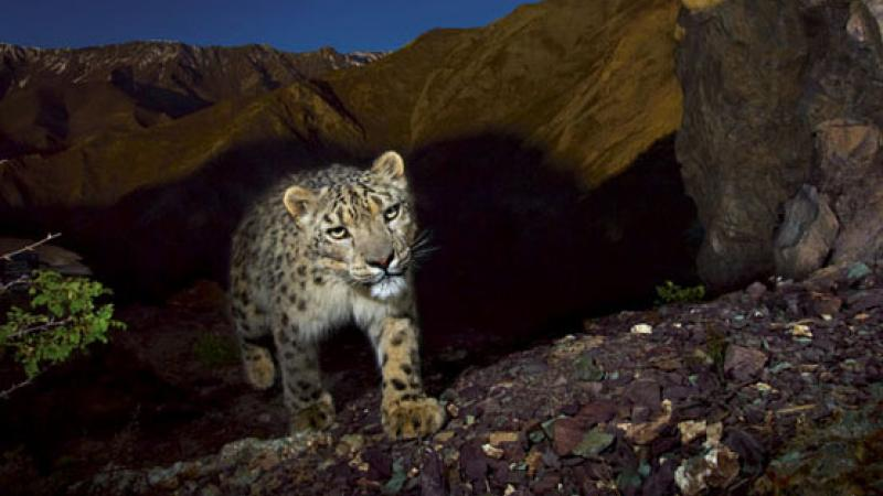 Not Just Pretty Pictures: Photographers Aid Conservation Issues