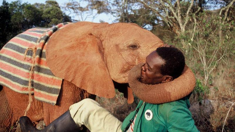 The Sheldrick Trust: 40 Years On